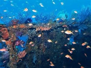 201213熱海ダイビング (14)