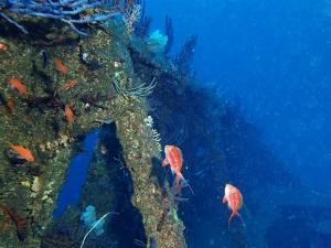 201213熱海ダイビング (26)
