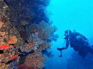 201213熱海ダイビング (54)