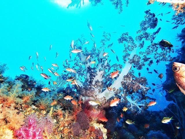 201213熱海ダイビング (81)