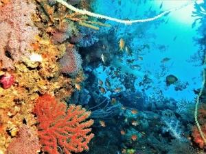 201213熱海ダイビング (78)