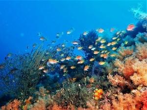 201213熱海ダイビング (88)