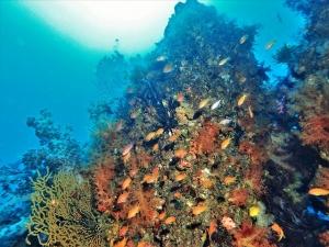 201213熱海ダイビング (96)