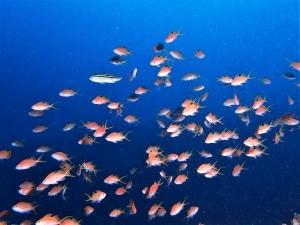 201213熱海ダイビング (6)
