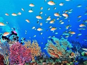 201213熱海ダイビング (10)