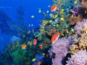 201213熱海ダイビング (92)