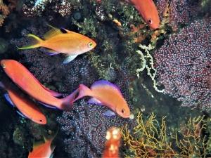 201213熱海ダイビング (65)