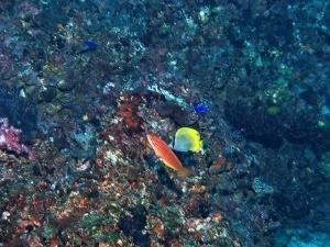 201213熱海ダイビング (102)