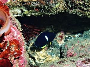 201213熱海ダイビング (174)