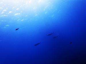 201213熱海ダイビング (111)