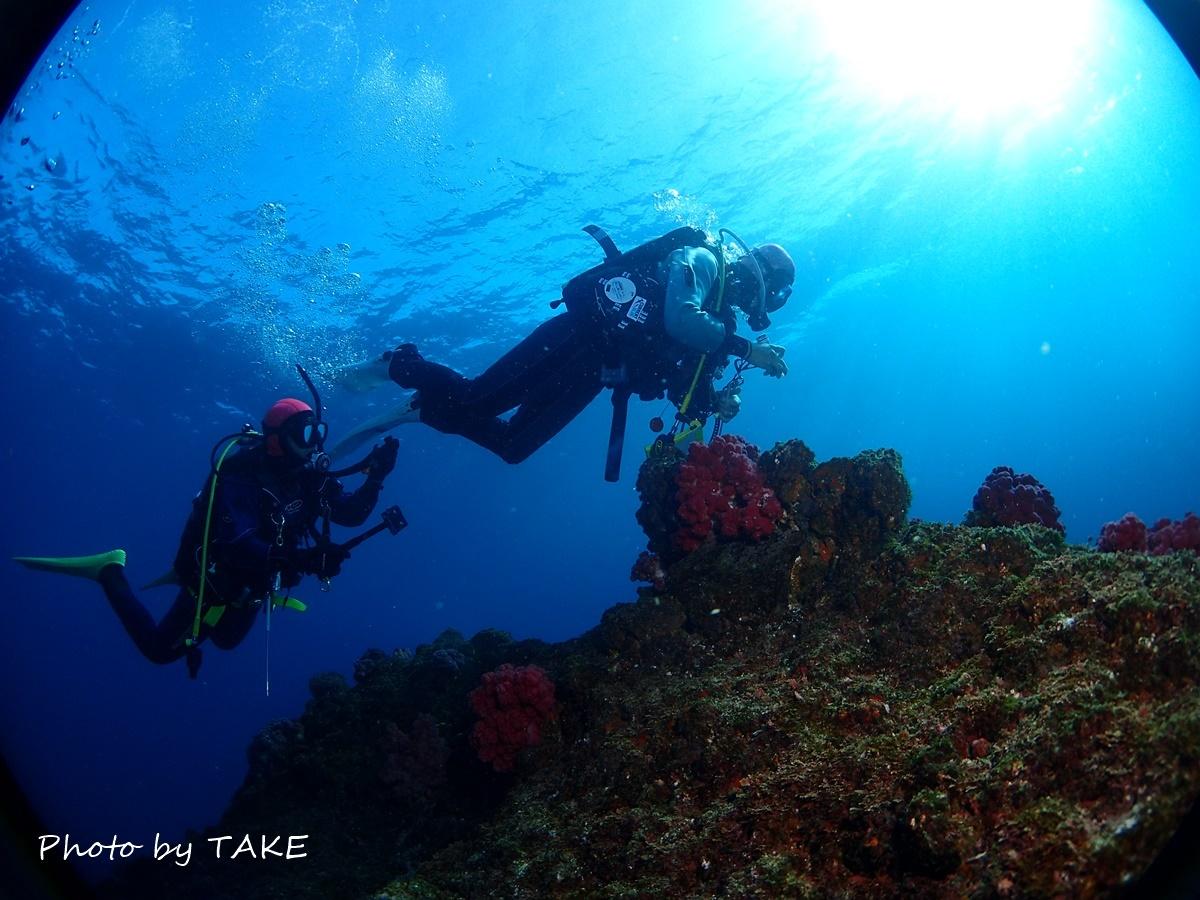 熱海冬ダイビング (14)