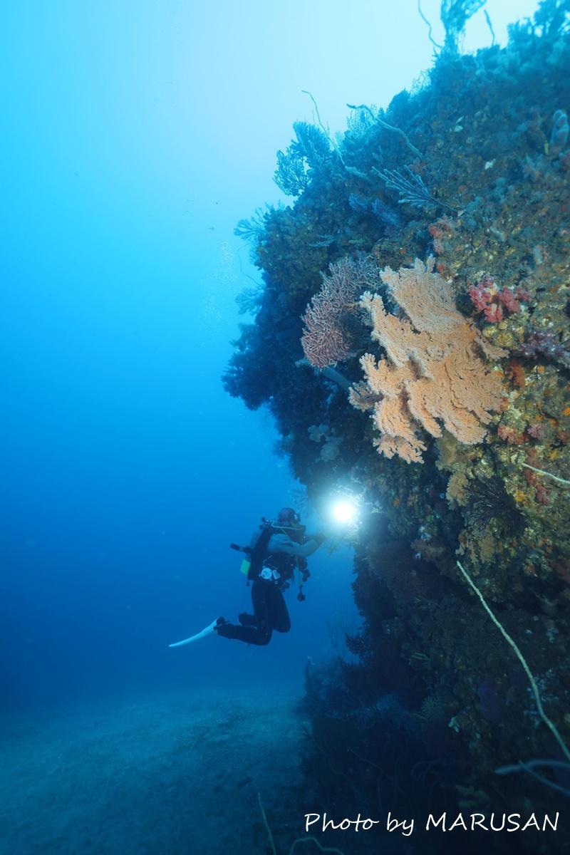 熱海冬ダイビング (17)
