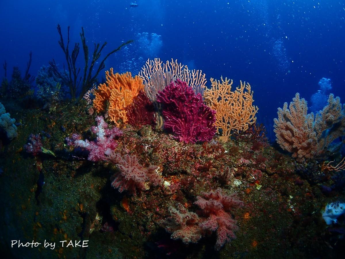 熱海冬ダイビング (2)
