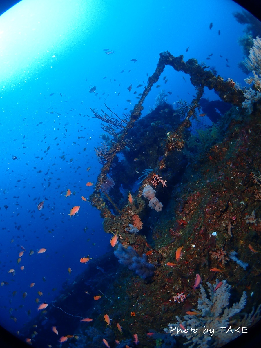 熱海冬ダイビング (3)