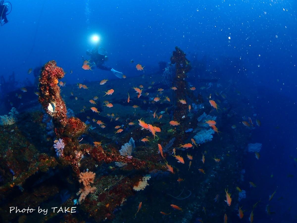 熱海冬ダイビング (4)
