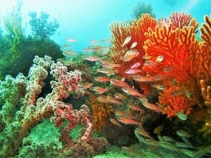 勝山サンゴ
