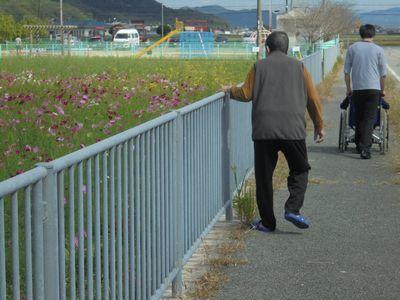 秋風の中、可憐に咲くコスモスを観に行きました!