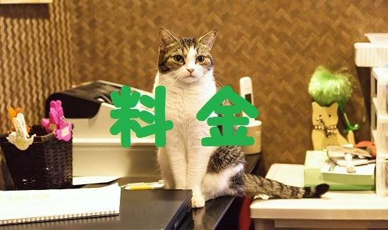 GAK88_misebanneko_TP_V.jpg