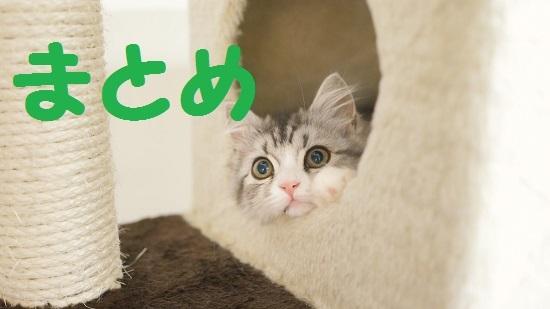 HIR96_nekotawakarakaodakedasite_TP_V.jpg