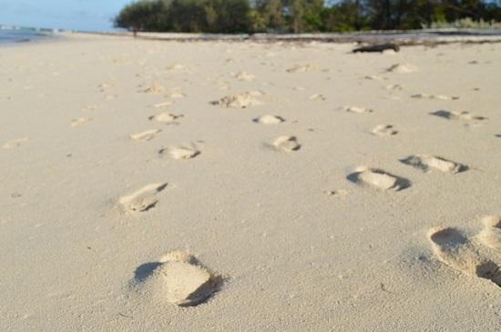 footsteps-2123656_640.jpg