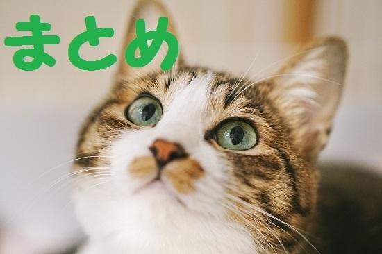 miagerukijineko171027_TP_V.jpg