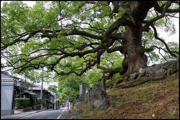 2012_M9_Kyoto_019
