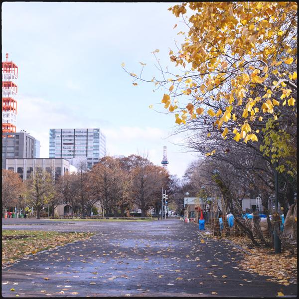 札幌大通り_4