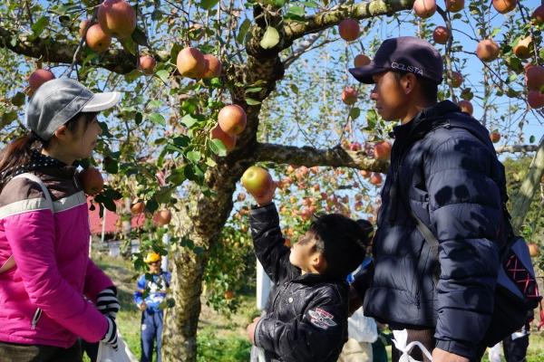 さいくりんご2019_2