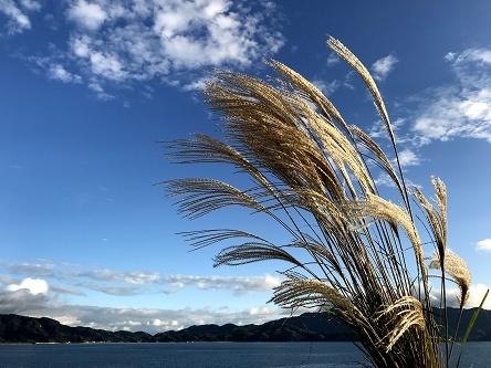 コピー (1) ~ 10月愛媛県大三島沖2