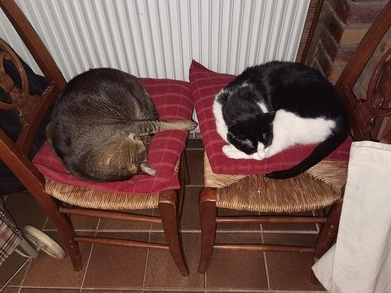 外出禁止のネコたち