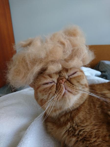 cat_hat_fallen_hairs