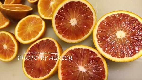 赤いオレンジ1