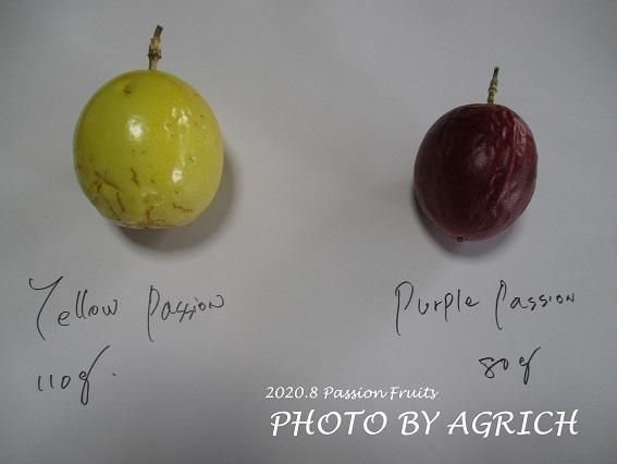パッションフルーツ比較1