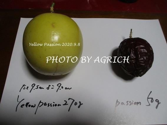 yellow passion1