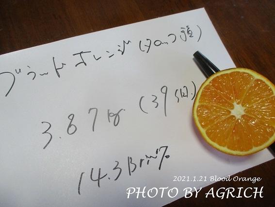 ブラッドオレンジ1