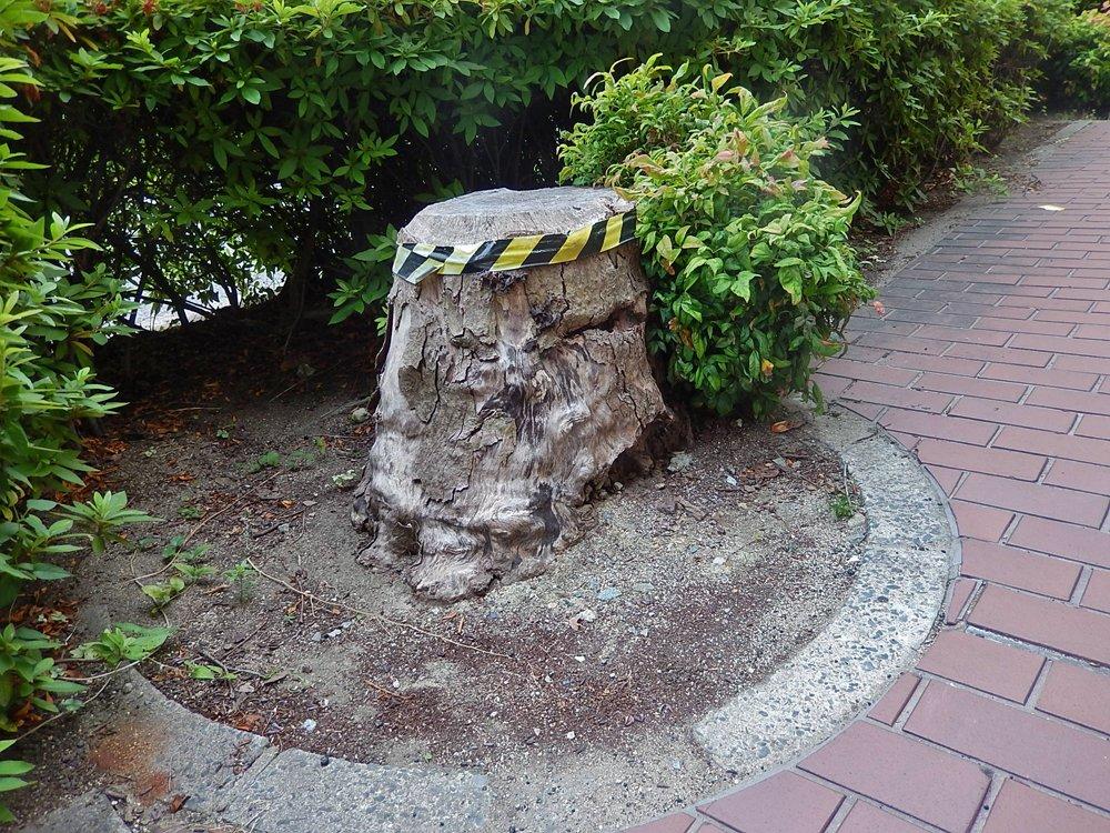 街のきのこ132兵庫県議会前のきのこA