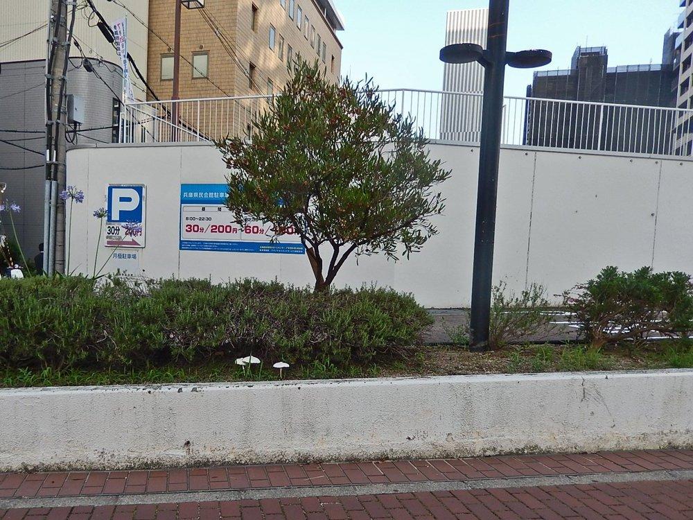 街のきのこ139兵庫県民会館前のきのこ