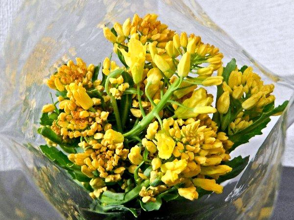 キレイな菜の花