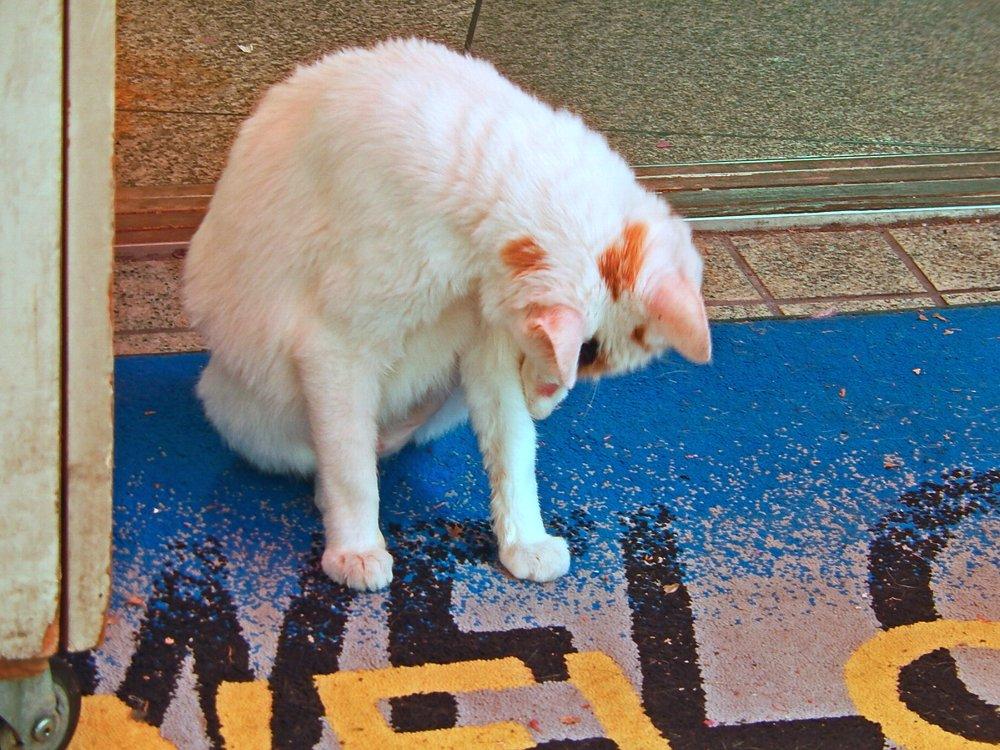 店先で足の裏を舐める猫