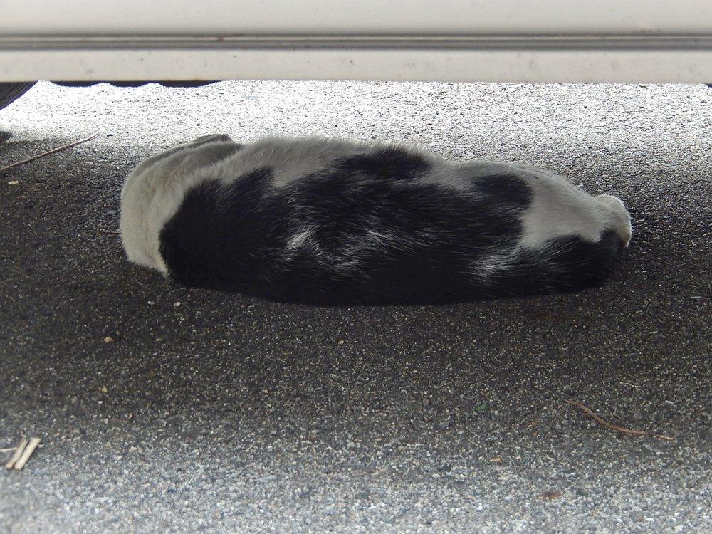 車の下の斑猫
