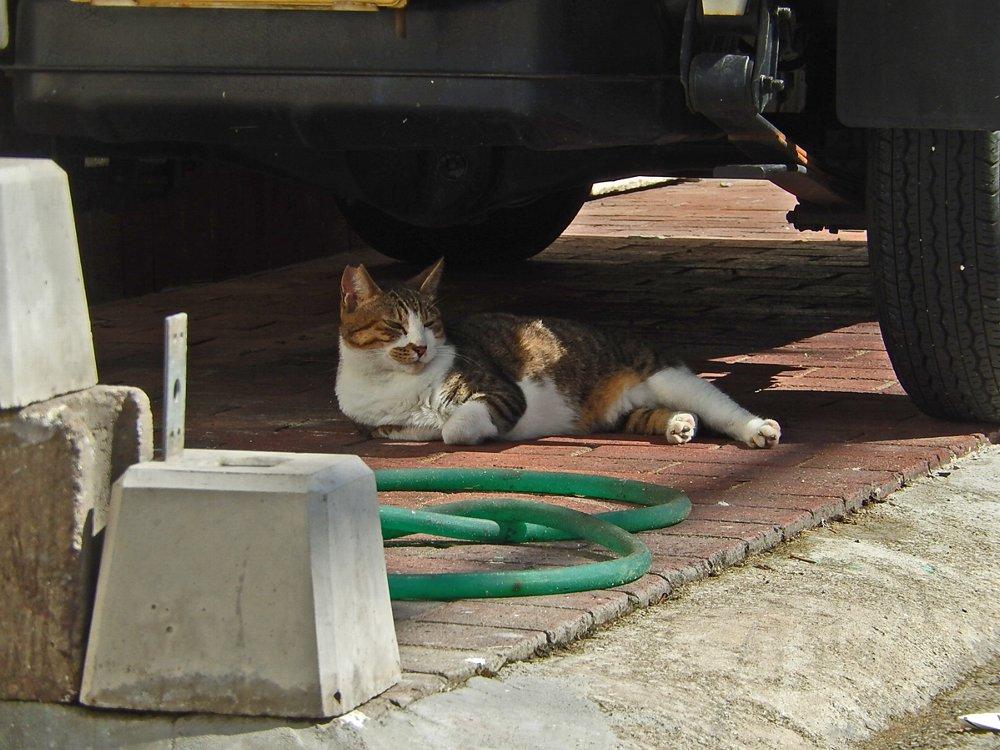 軽トラの下で寛ぐ猫