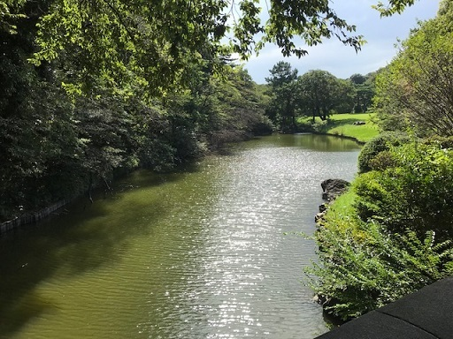 明治神宮池