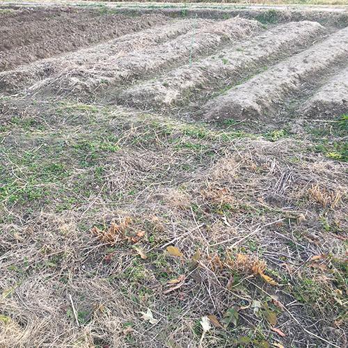 春うらら、今年も雑草との戦いが開幕しました①
