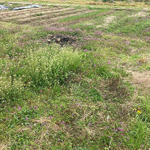 春うらら、今年も雑草との戦いが開幕しました④
