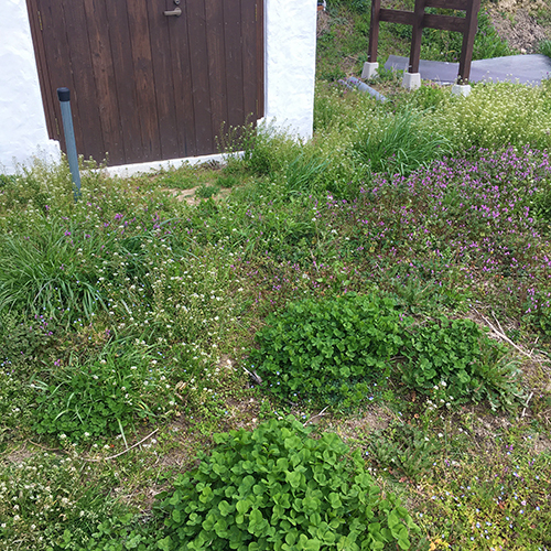 春うらら、今年も雑草との戦いが開幕しました⑤