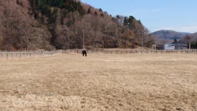 渡辺牧場風景