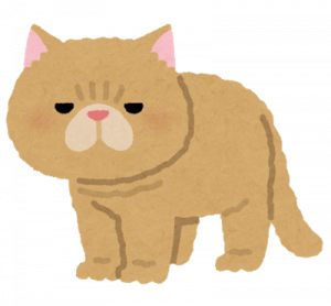 cat_exotic_shorthair.png