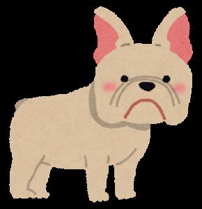 dog_french_bulldog_202007231924558f0.png