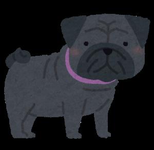 dog_pug_black.png