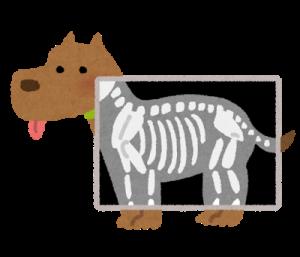pet_xray_dog.png